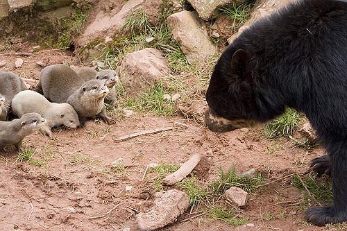 Hello my otter friends
