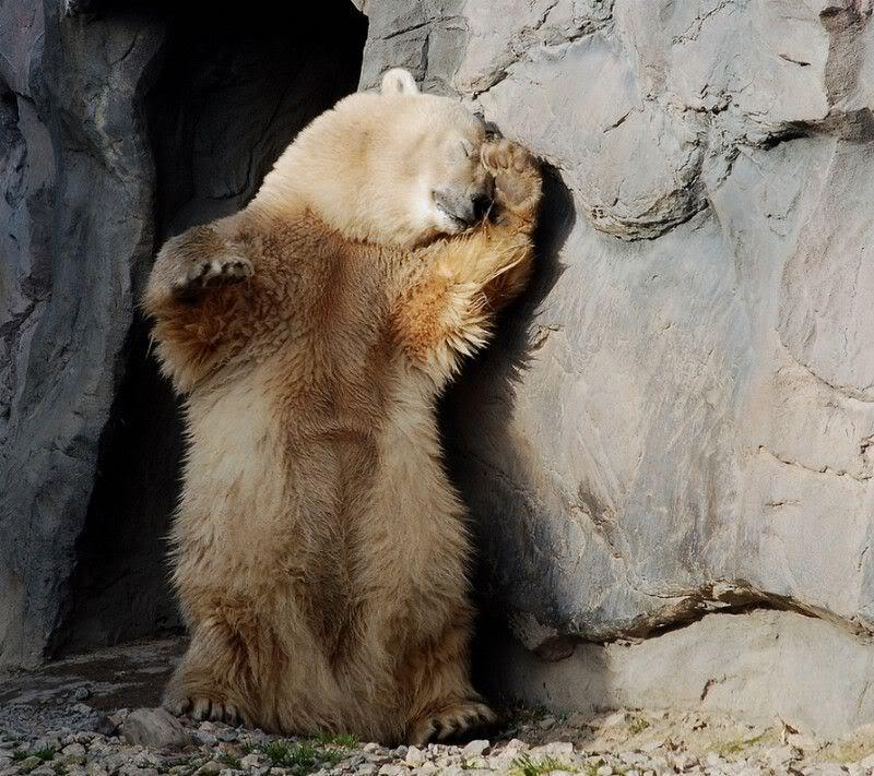 Bear is not a morning bear