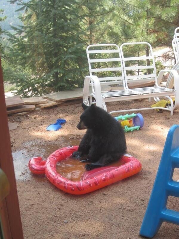 Bear finds tiny lake depressing