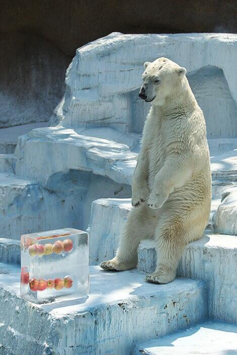Why would anyone put my food in a block of ice??