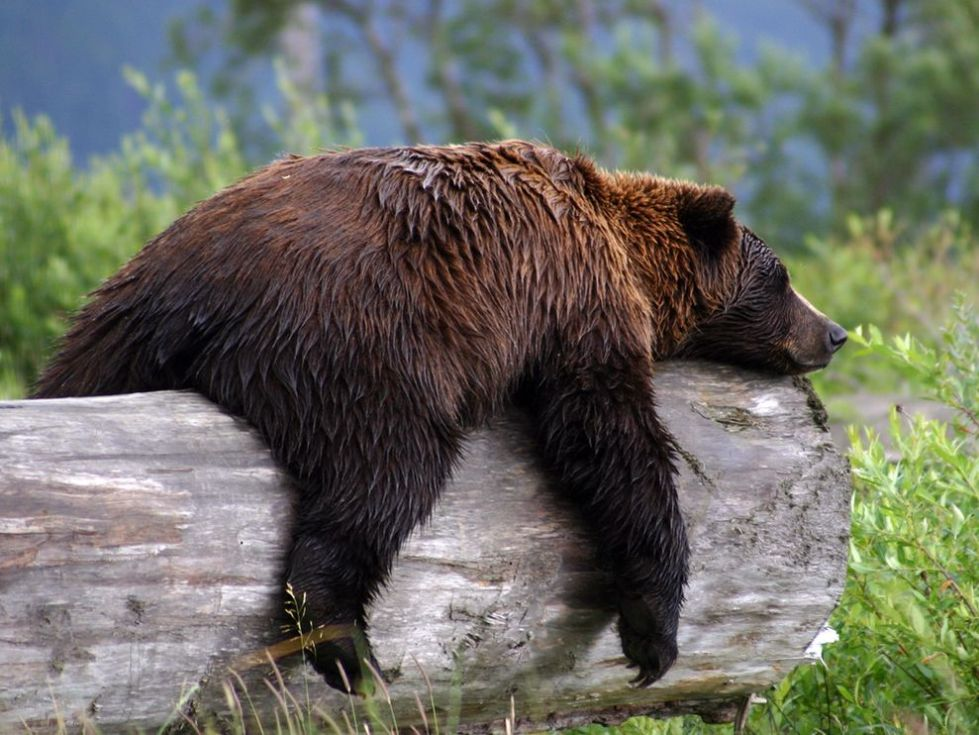Bear enjoys post-swim nap time