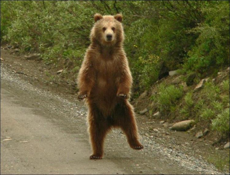 Bear gets jiggy with it