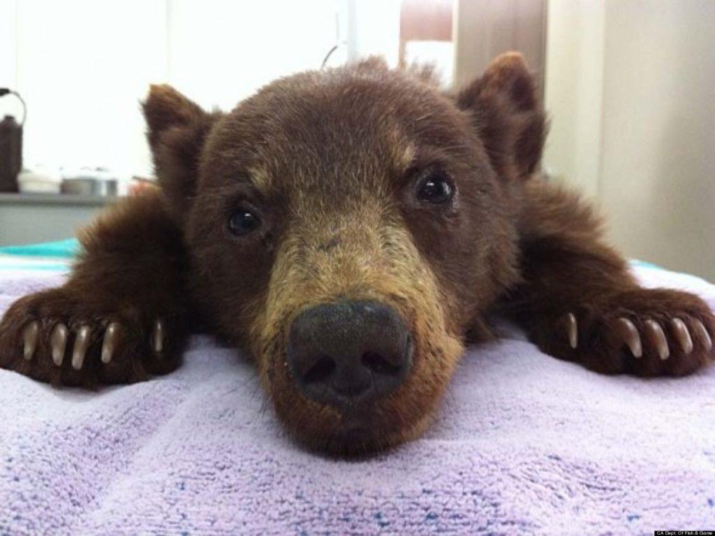 TINY BEAR!